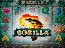Автомат Gorilla: автомат на деньги с джек-потом
